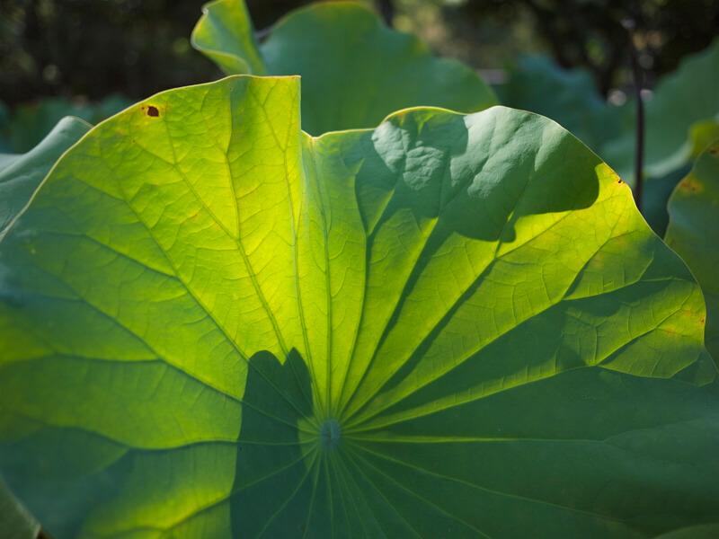 看綠色的植物對眼睛有幫助噢!